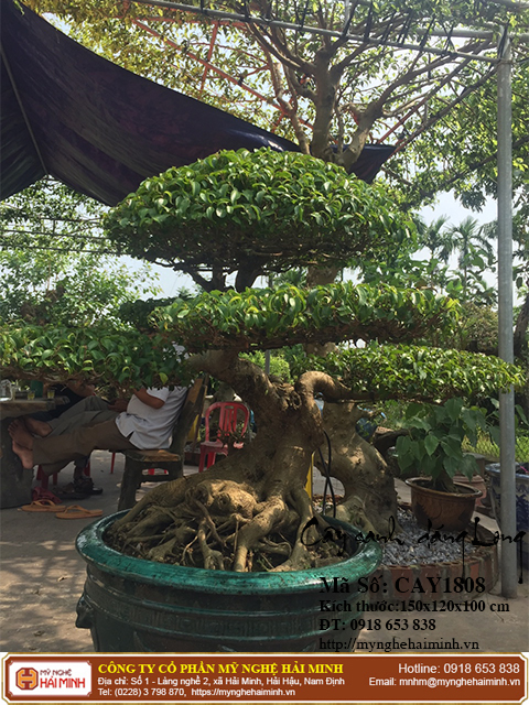 Cay Sanh Dang Long mynghehaiminh CAY1808a
