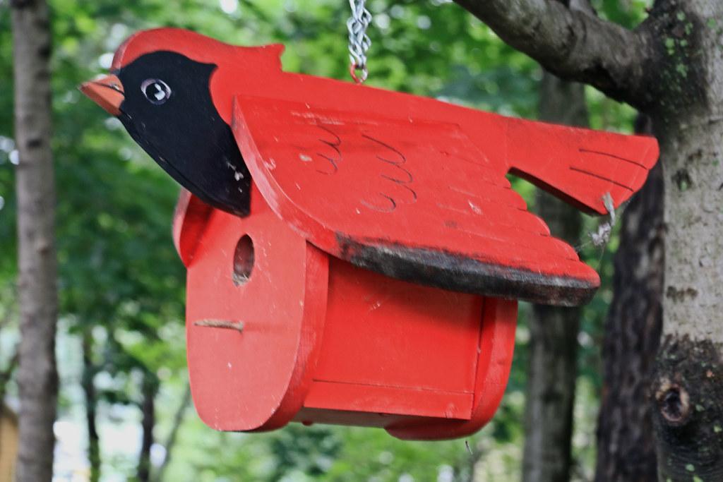 Cardinal Bird Feeder | By Hbickel Cardinal Bird Feeder | By Hbickel