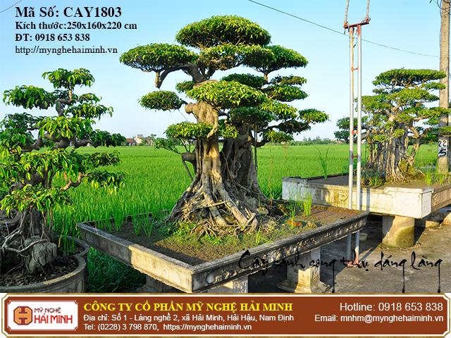 Cay Sanh Song Thu Dang Lang CAY1803c