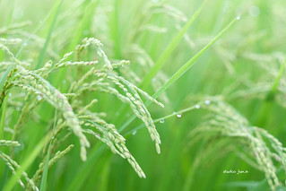 18-08-12XT203283_PROVIA | by jun.kuroita