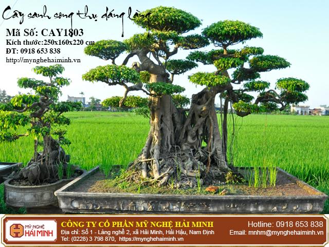 Cay Sanh Song Thu Dang Lang CAY1803a