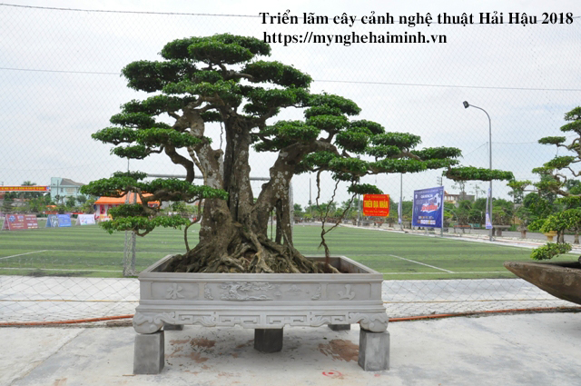 trien lam cay canh haihau CAY2018 31