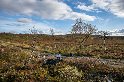 DSC_9237 | by adventurelandlapland