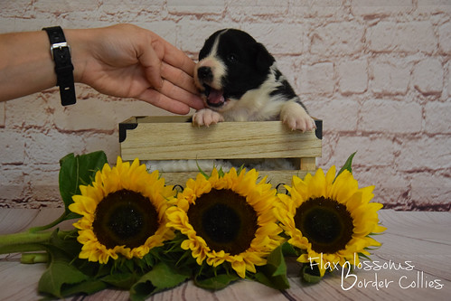 19-08 nieuws pup3 | by flaxblossoms.be