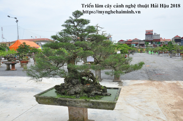 trien lam cay canh haihau CAY2018 47