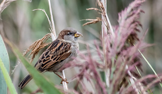 Sparrow in the Weeds | by Stephen Downes