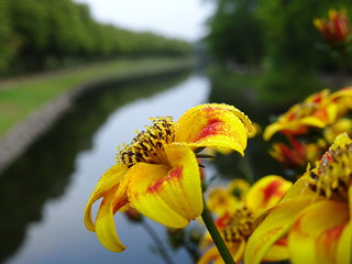 Summer Flowers Over Canal ☺ | by crush777roxx