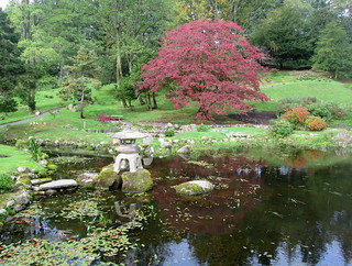 Acer at Japanese Garden, Cowden | by piningforthewest
