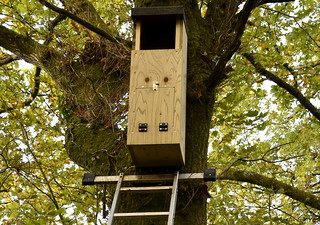 New tawny nest box | by Kevin Keatley1