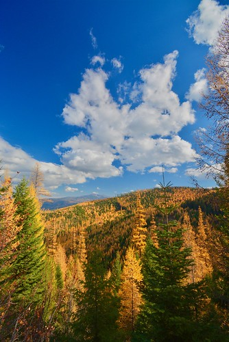 Larch at Todd Creek | by Montucky