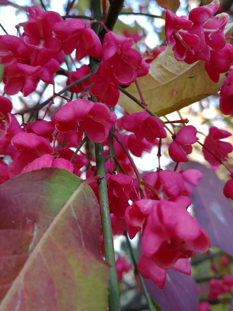 Des Centaines De Petites Fleurs Avec Leur Fruits Mais Je Flickr