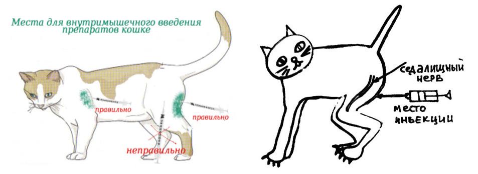Как сделать внутримышечную инъекцию кошке самостоятельно фото