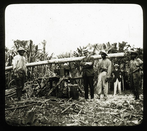 Sugar Mill For Crushing Cane, Jamaica, ca 1890 | by The Caribbean Photo Archive