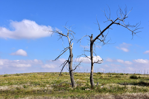 Two barren trees in the prairie | by MarkusR.