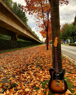 fall has fallen autumn has arrived and a fender telecaster flickr rh flickr com