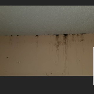 Heavy infestation of bed bugs in a home in #Charleston. This infestation could have potentially been ongoing for well over a year unchecked and ignored! #pestcontrol #bedbugs #residentialpestcontol | by biotechpestmanagement