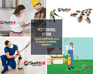Pest Control Services in Epsom Areas | by swiftkilluk