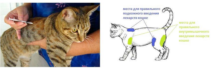 Как делать укол кошке фото