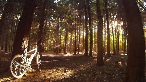 Pinewoods SouthWeald Essex UK | by Wholly Spokes