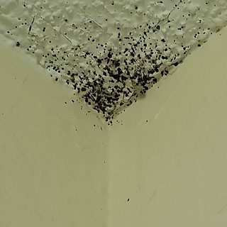This is #bedbug feces one of the tell tale signs of an infestation. Bed bug feces is black in color and usually in round dots. #pestcontrol #Charleston #summervillesc #residentialpestcontol #bedbugs | by biotechpestmanagement