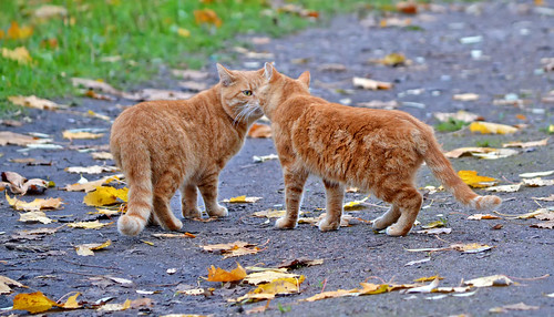 Nose-to-Nose.  🐈🐈  Meow... Meow... Autumn cats. Finland. | by L.Lahtinen (nature photography)