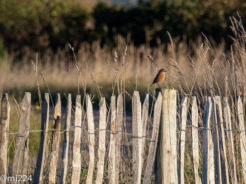 BIF  (Bird on a fence) | by dudutrois