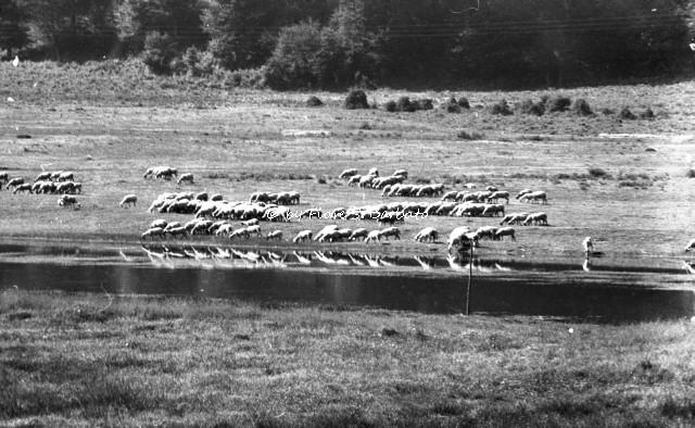 Fiori Bagnoli Irpino : Bagnoli irpino av lago laceno wikipedia bagnoliu flickr