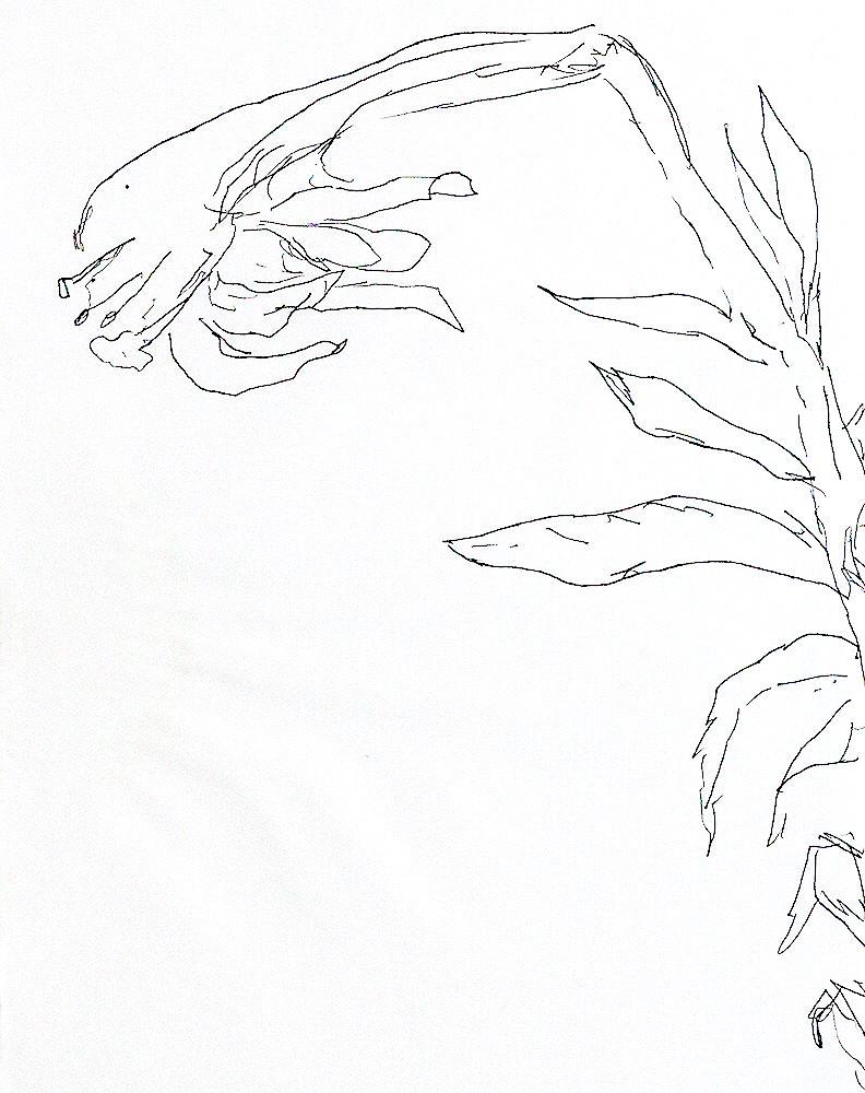 Flowers Drawings Ink On Paper Flower Drawing Raphael Perez Flickr
