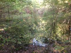 Gross Pond