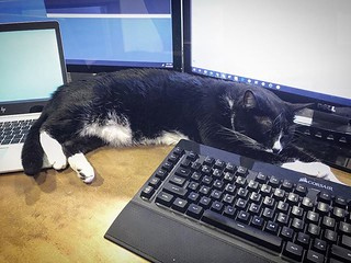 Coworker Approved #cat #computer @corsair #keyboard #laptop #workingfromhome | by brendan-c