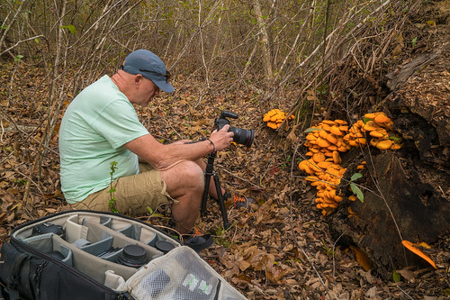 Alan Cressler and Omphalotus olearius (Jack-O'lantern Mushroom) | by jimf_29605