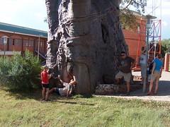 Baobab used as a Jail, Kasane