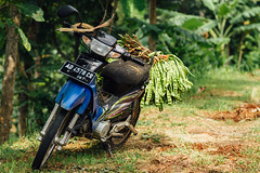 Motorcycle Loaded with Stinky Beans, Java Indonesia