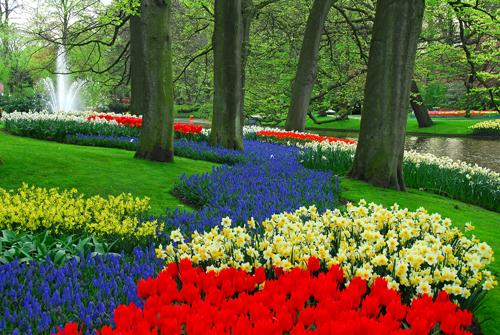 ... Keukenhof Tulip Gardens Tour, Amsterdam | By Viator.com