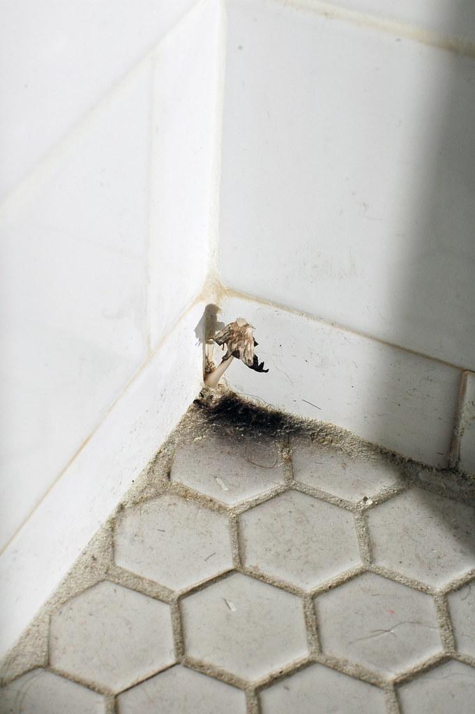 Bathroom Mushroom This Corner In Our Bathroom Has Been Neg Flickr