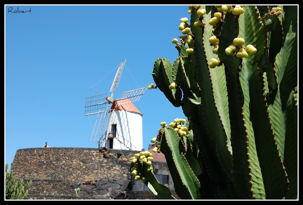 Jard n de cactus molino de viento en el jard n de cactus for Molinos de viento para jardin
