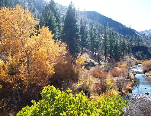 Fall Foliage Along The Bizz Johnson Trail Near Susanville