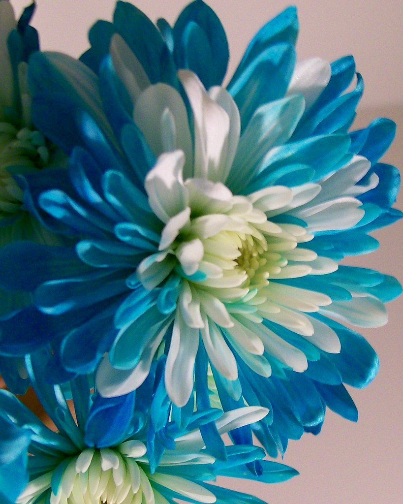 Blue and white flower smme eeze flickr dhlflorist Image collections