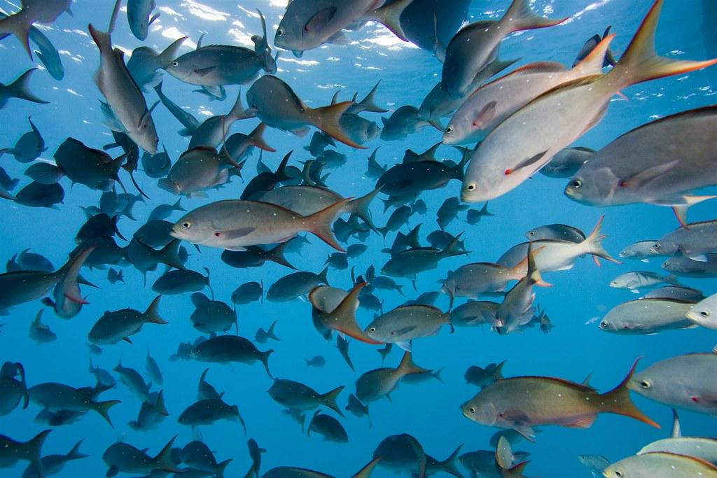 En el mar la vida es maacutes sabrosa vid20160525 - 3 5