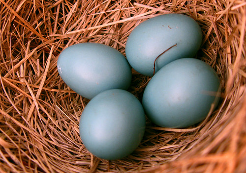 Robin Eggs are really Blue. | by photoholic1