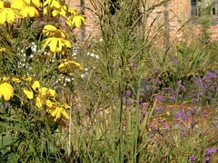 Molinia Windspeil & Rudbeckia Herbstonne | by James's GW Blog