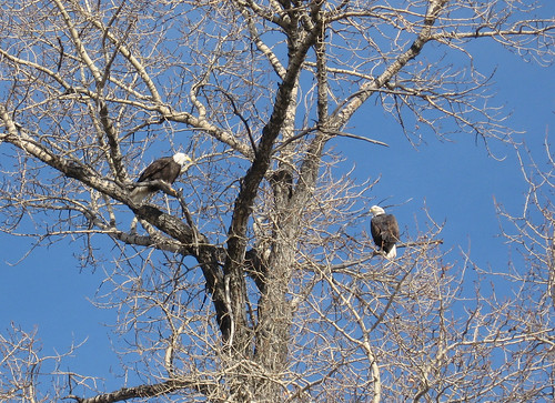 Eagle Family | by Linda M. Cunningham