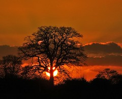 Sunset and tree. | by algo
