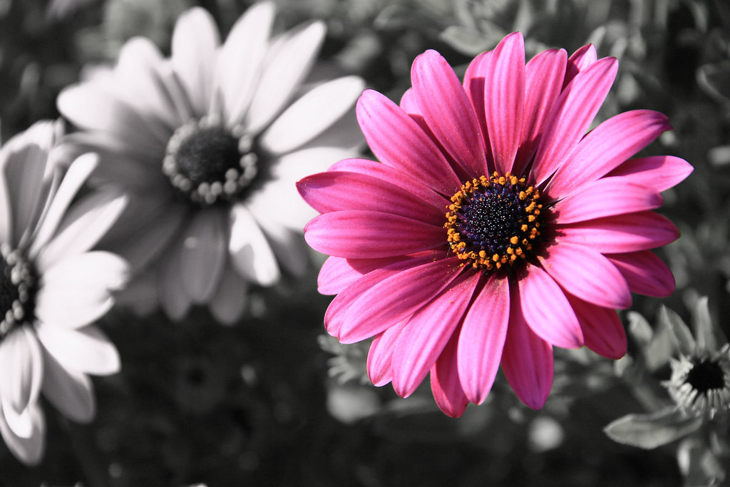 flowers selective coloring color - photo #2