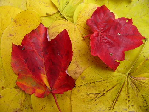 fall colors | by Kathleen Tyler Conklin