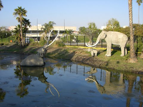 Difficulty dating la brea tar pits