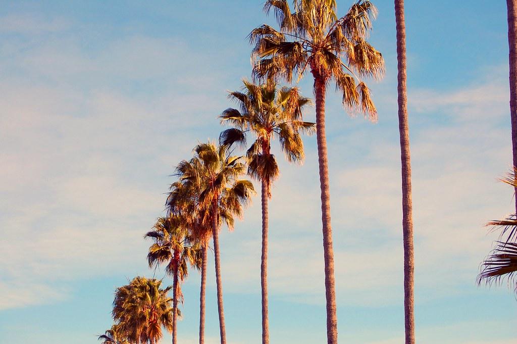 vintage palm trees Amanda Carson Flickr