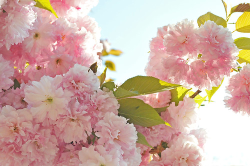 Spring am PINK! | by OldhaMedia