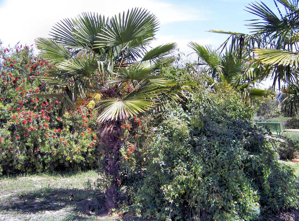 Palma sarda sardegna serdiana il parco che circonda la for Palma di san pietro