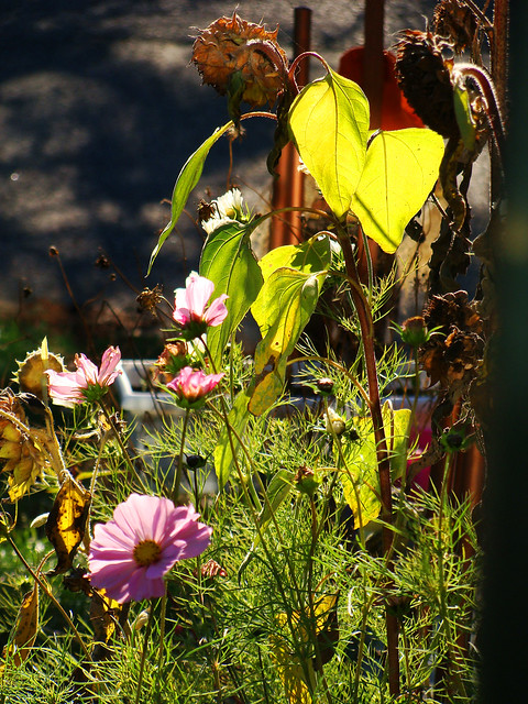 Jardin d 39 octobre flickr photo sharing for Jardin octobre